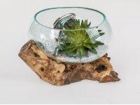 Formano Windlicht Wurzel mit Glas Wurzelholz mit eingeblasenem, klaren Glasaufsatz Windlichthalter